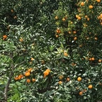 静岡と言ったらこれ、冬の果物と言ったらこれですよね🍊