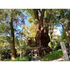 2019年12月12日 #来宮神社 何度見てもすごい木 ☺︎