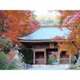【愛知】    豊橋にある普門寺です。 ここは12/15現在、紅葉が見頃です👍
