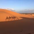 Morocco #砂漠 #サハラ砂漠 #ラクダ