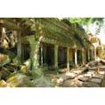 カンボジア/シェムリアップ タプローム寺院  #TaProhm
