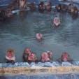 函館の熱帯植物園のお猿さんたち。とっても良い顔して温泉に浸かってます♨️しかし見てる人間はとっても寒い…