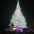 北海道 函館 クリスマスツリー