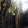 トンネルをくぐった後に、このガジュマルの木がどーんと目の前に現れます。 感動です。