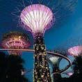 シンガポール ガーデンズバイザベイ