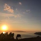 宮崎の最南端、都井岬の夕暮れ✨ 野生のお馬さんをこんなに近くで拝めるとは😳 今年最後の旅行納めで良いものが見れました♪