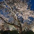 2019. 4.2  京都🍡~二条城~