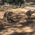 オーストラリア、ゴールドコースト、カランビン動物園。