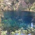 青森県、十二湖にある青池です。 ホントにインクを流したような透き通った青でした。 GWの最中に行きましたが、弘前や角館に人が集中してたせいか、この景色は独り占めできました。