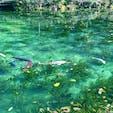 岐阜県のモネの池。 綺麗だった✨✨