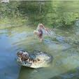 #ハートレイズ・クロコダイル・アドベンチャーズ #ケアンズ #オーストラリア  2019年12月  リアルジャングルクルーズで ワニが餌に飛びつくジャンピング餌付け🐊🚤  ワニは2週間に1回、鶏1羽程度の餌で生きていけるらしく この日も全部寸止めで餌もらえてなかった😳😳笑