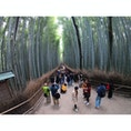京都府嵯峨野区嵐山にある『竹林の小径』 GoProで撮影すると異世界観が増しますね‼︎  #京都 #嵐山 #竹林