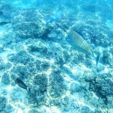 #グリーン島 #グレートバリアリーフ #オーストラリア  2020年1月  グリーン島でシュノーケリング🤿 思ってたより熱帯魚いて、追いかけっこした🐠🐠