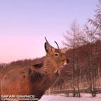 北海道鹿追(しかおい)町にある扇ヶ原展望台は広大な十勝平野を見渡すことが出来る絶景スポットです。景色が美しいのはもちろんのこと、野生のエゾシカが近距離で現れることもあるスポットです。もし現れた場合は触ったり餌をあげたりせずに、そっと見守ってあげてください!#北海道 #鹿追町 #扇ヶ原展望台