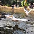 神戸どうぶつ王国[兵庫/神戸]  ペリカンが飛んでるところを初めて見たけど、迫力が凄くて! あと、滅多に動かないと言われているハシビロコウが喧嘩してて!  あとはなんといってもバードショー 感動して2回も見てしまいました(笑)  鳥好きにはたまらない場所でした⭐︎