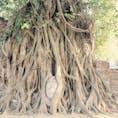 タイ アユタヤ遺跡 木の根に覆われた仏頭