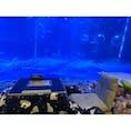 石川県、のとじま水族館🐟 水槽の前にこたつがあった😳 癒しスポットすぎて、入ったら出られない特等席!!