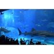 美ら海水族館🐠🏝  大きな水槽で見るジンベイザメは 大迫力でした!😳✨  #水族館