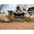 兵庫県神戸市にある『六甲山牧場』  一体何匹いるんだという羊の数に圧倒されました。  そしてその分💩もたくさん落ちてました。笑  #兵庫 #神戸 #六甲山 #六甲山牧場 #羊