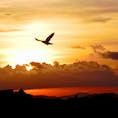 山口県 周防灘の夜明け