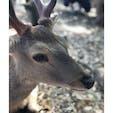 鹿さんたち。  2018.05.05_奈良県 奈良公園