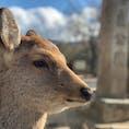 奈良公園 神様の御使い