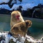 草津熱帯園  お猿さんも極寒の中、草津の湯を堪能してます♪ たくましい!(笑)