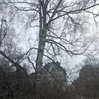#finland#helsinki#tree  木と家