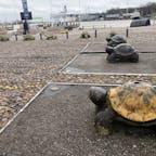 #finland#helsinki#turtle