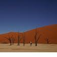 #ナミビア デッドフレイ 死の沼からこんにちは。 ナミブ砂漠