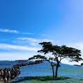 @茨城県ひたちなか市 Hitachi-naka, Ibaraki pref.  国営ひたち海浜公園のネモフィラ Hitachi Seaside Park, nemophila  茨城県随一の観光名所。 #国営ひたち海浜公園 #ネモフィラ  (2019/04/28)
