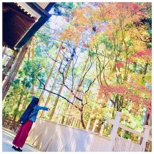 和歌山 ~高野山~ 今は季節外れなのですが...秋は紅葉がとても綺麗です.*・゚ 高野山は涼しいので、普通の紅葉シーズンより少し早めに行くことをオススメします 私は11月中旬に行ったのですが、写真の紅葉以外はほとんど散ってしまっていました(。•́  •̀。)💦  #高野山 #紅葉 #和歌山