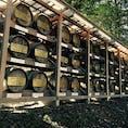 明治神宮には、日本酒だけでなく、樽の洋酒もたくさん奉納されています。