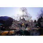 ❏神奈川県箱根町  ✍︎箱根ガラスの森美術館  2020.2.8-9