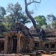 #タ・プローム #シェムリアップ #カンボジア 2020年2月  補強でなんとか持ち堪えている場所ばかりだったから 数年後には見れなくなっているかもなあ...😭😭
