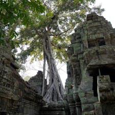 #タ・プローム #シェムリアップ #カンボジア 2020年2月  #トゥームレイダー 🎬を行きの飛行機で 予習すればより楽しめること間違いなし😉😉