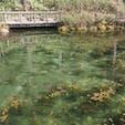 2020.03.01 鯉と我慢勝負のモネの池