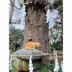 江島神社 奥津宮   亀の甲羅模様がついている亀石 この亀石には不思議なパワーがあるそうで。 ねこさんものんびり〜