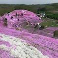 【2019・皐月】 北海道東にて季節の絶景を嗜む。  ひがしもこと芝桜公園