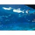沖縄(美ら海水族館)