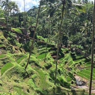 インドネシア*Uma Pakel  コーヒー農園とブランコが楽しめる! コーヒーは飲み比べして、ブランコは数種類から選んで乗りました✨