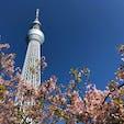 東京 押上 スカイツリーと桜