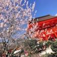 京都の上賀茂神社で撮りましたー🌸 桜が綺麗でした。  #上賀茂神社#桜