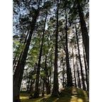日南飫肥 飫肥城 苔の絨毯に真っ直ぐ伸びた飫肥杉