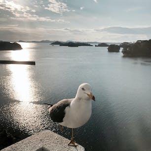 2020.3.24 宮城 #松島