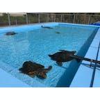 高知県 〜むろと廃校水族館〜 廃校になった場所を水族館に! プールに亀さんが泳いでます。 校内も跳び箱や手洗い場を水槽にしたり とても面白い水族館となっています🐠