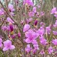 椿の見頃はあと少し先みたい!かわりにこのお花の写真💐もう少し暖かくなってからリベンジします🥗