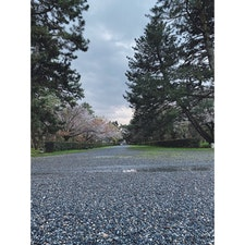 京都来てはじめての朝。  ふらりと歩いたら京都御所に出会いました。  静岡出身の私からしたら、何もかもが規格外の大きさで驚き。  ゆるーく温かい目でお願いします❔  #京都御所