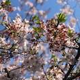 お家の近くの公園! 葉桜も咲いてて綺麗でした!✨😄