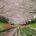 自粛中 車で買い物行く途中で見つけた桜 桜吹雪が凄かった🌸 癒されました